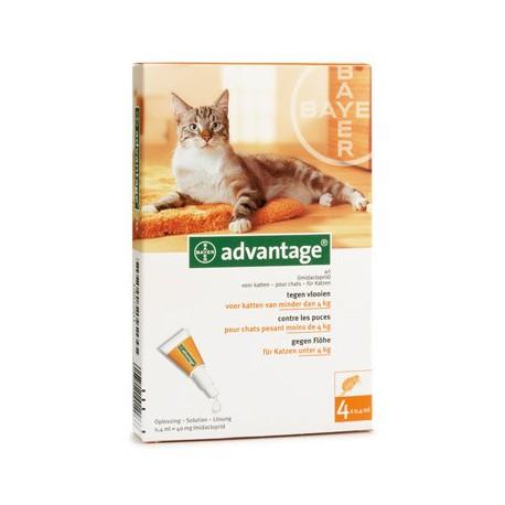 advantage kat spot on tegen vlooien bayer direct dierenarts. Black Bedroom Furniture Sets. Home Design Ideas